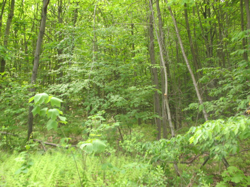 Flat Rock Road, Browndale PA: 17+ Private Acres For Sale
