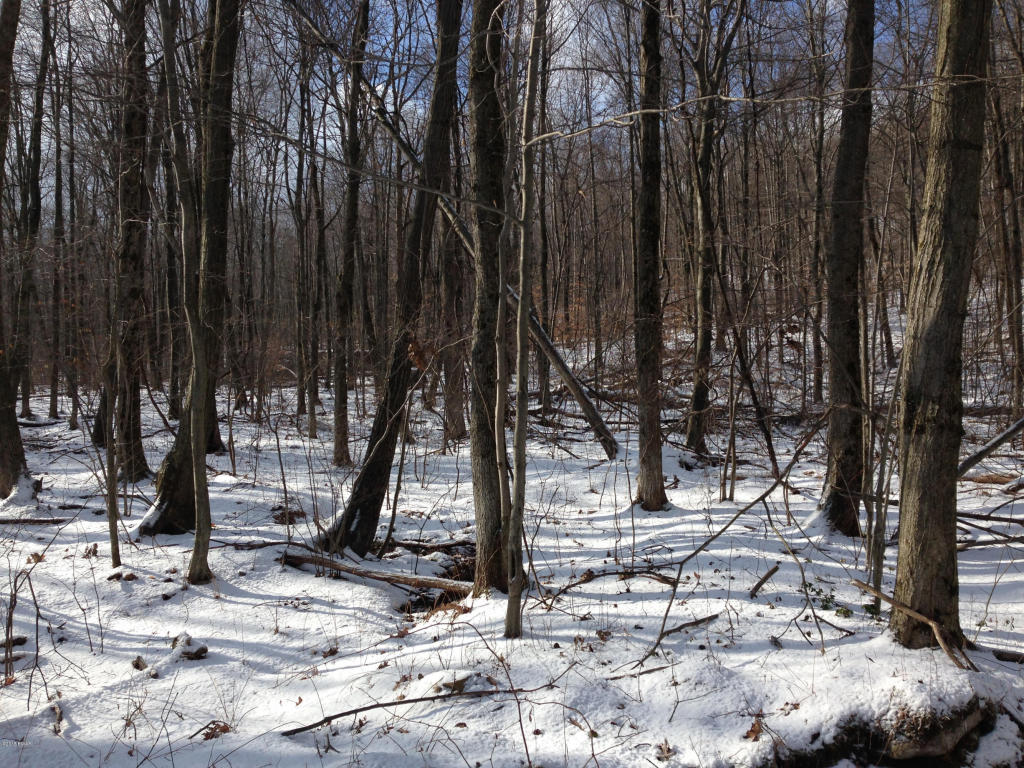 Waymart Wooded Lot