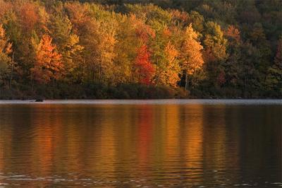 Cobbs Lake Preserve