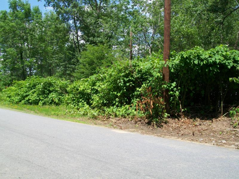 Wooded Lot No Development Vacant Elmhurst