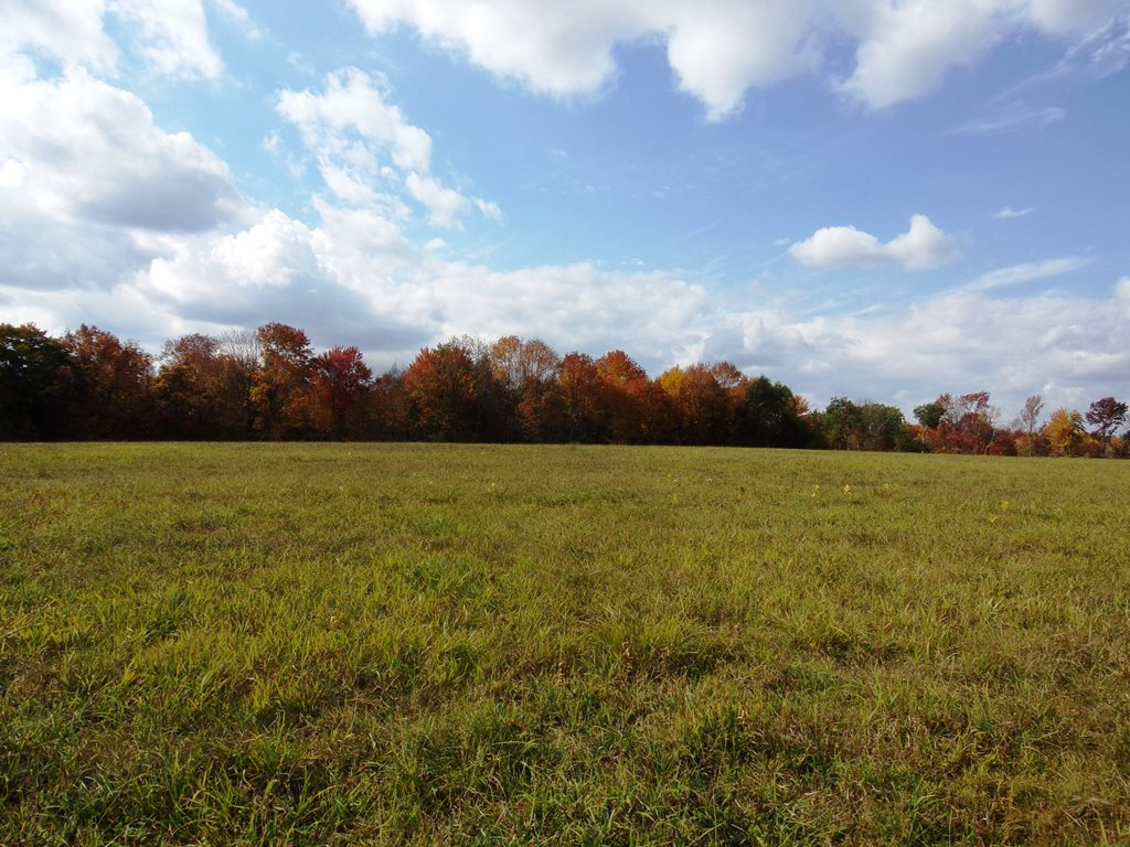Ledgedale Land 12 Acres