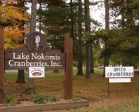 A beautiful eyeful of red at Lake Nokomis Cranberries, Inc.
