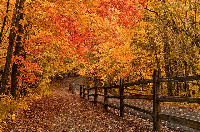 Fall fence Smithtown