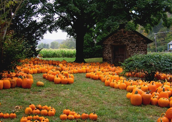 Local Pumpkin Picking, Parade & Halloween Events!!