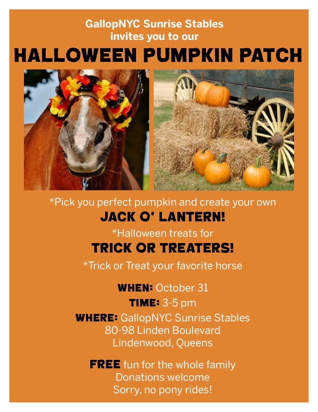 Halloween Pumpkin Patch at  GallopNYC Sunrise Stables
