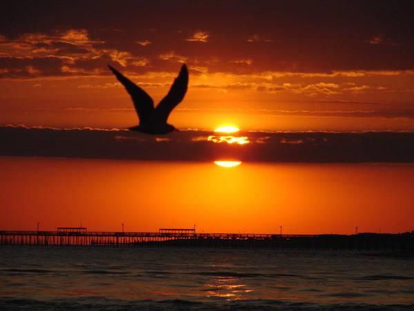 Bird flying by Jim Brickett on Flickr