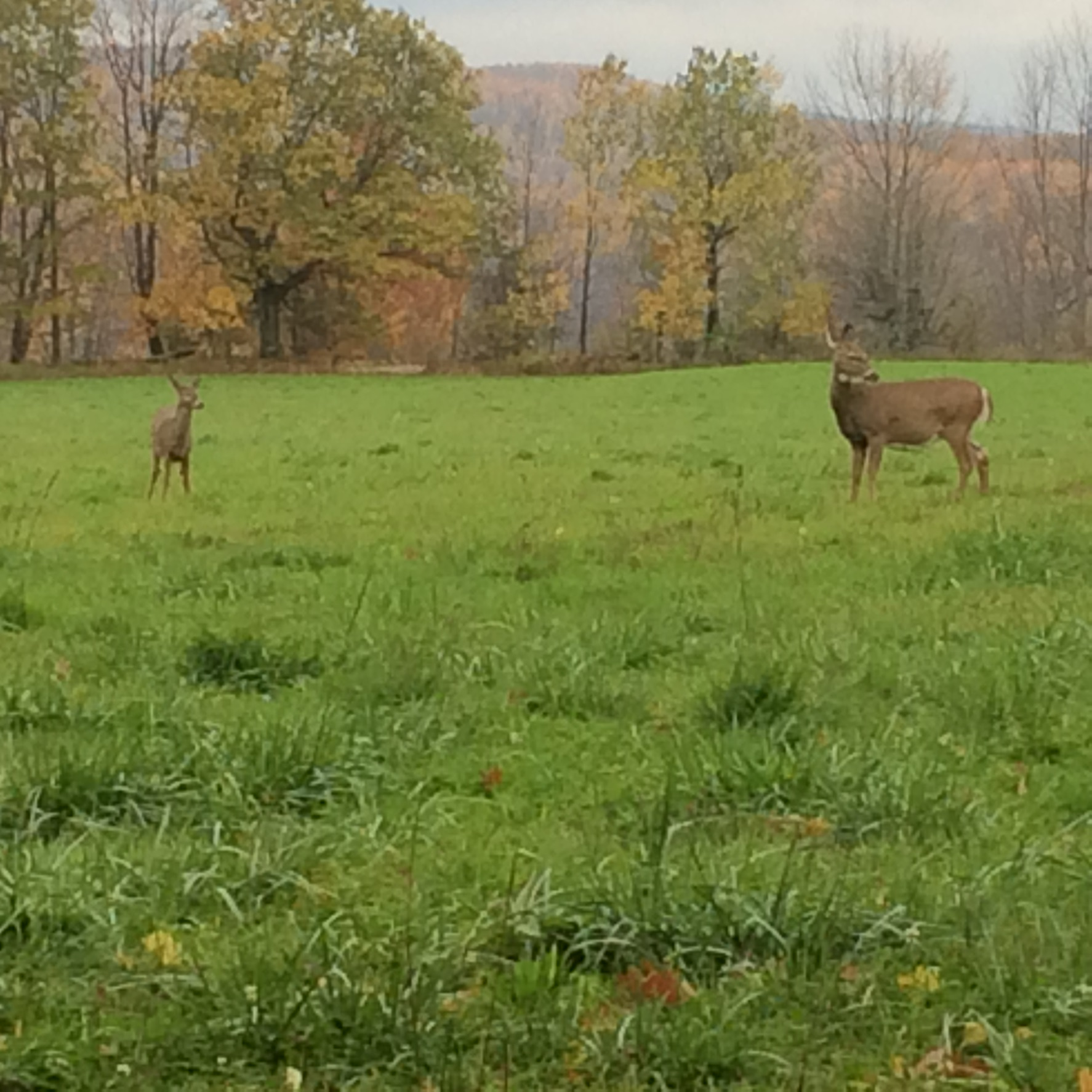 deer hunting leases
